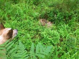 "We found ""bambi""!!!"