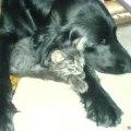 My lovley Nico, r.i.p <3 and Shana