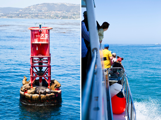 Val- och delfinsafari bjöd på det nämna, samt såklart solande sjölejon och sälar.