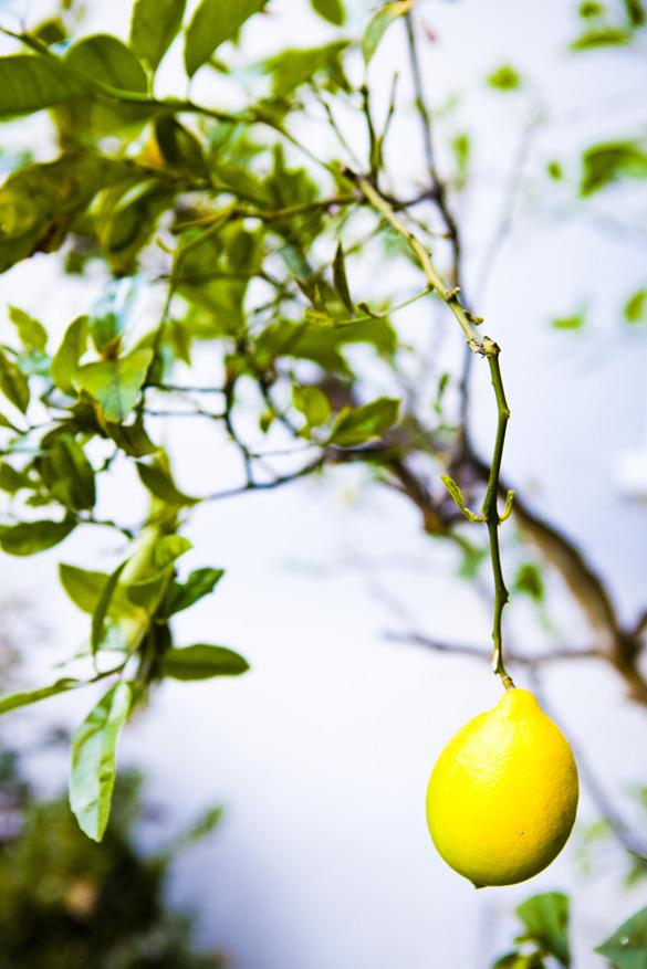 Citrus utanför dörren.
