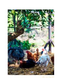 Farm Fowl - Farm Fowl A3