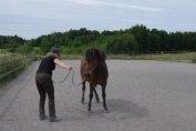 börja med att bara titta på hästens bakdel...