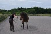 ...om hästen inte flyttar direkt så svinga försiktigt repänden...