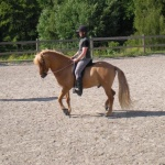 ...och mjuknar helt när hästen trampar under sig och ger efter. Fullständig frihet som belöning!