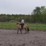 hästen böjer sin hals, mulen börjar komma in mot kroppen...