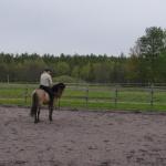 när hästen känns mjuk och avslappnad får den stanna, pausa och massor med beröm!