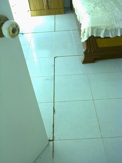 Termitangrepp i hus vid upptäcktes efter start av fastighetskontroll.