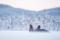 Kungsörnar i snö 2