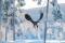 Kungsörn snölandskap 11