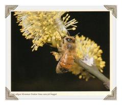 Rapsfält smörgåsbord för bin