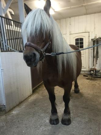 Adenner Hästen Irina väntar på sin tur :)