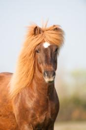 Horse / Häst _DSC5414