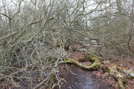 Ottenby grove / Ottenby lund_DSC2592