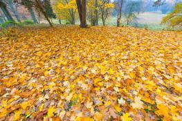Autumn leaf / Höstlöv 1