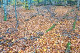 Autumn leaf / Höstlöv Hornsö Ekopark_DSC7943