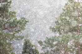 Snowfall / Snöfall