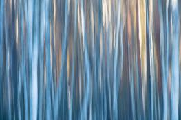 Tree / Träd  (single exposure camera movment)_DSC4244