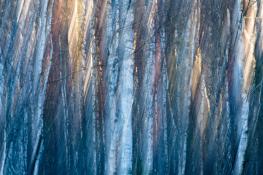 Tree / Träd  (single exposure camera movment)_DSC4249