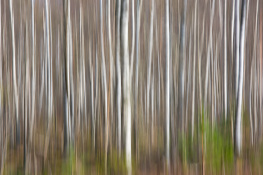Tree / Träd  (single exposure camera movment)_DSC4501