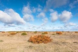 Öland`s world heritage / Stora alvaret _DSC0137
