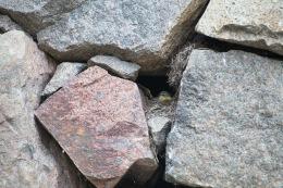 Grey wagtail / Forsärla _UAN6138