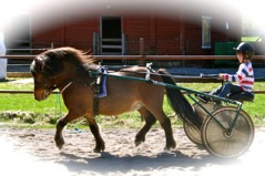 Ludwig 6 år trimmar 2011 års kriterivinnare L.A Power