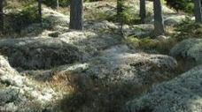 Foto: naturverk.com