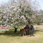 Noblezze och Springtime