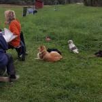 Hundarna fick vänta på sin tur.