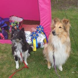 På söndagen tog Boogie och Foxie hem varsin pinne i hopp klass 1. Foto: Janne Holmgren