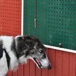 Igor 4 - 20200830 - Foto Inger Bergström0008