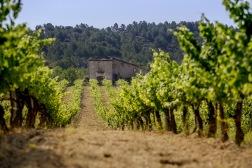 Ekologisk vinodling i Penedès (Katalonien)