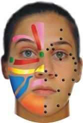 Zoner i Ansiktsreflexologi