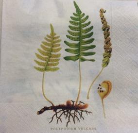 Servett 33x33, blad - Servett blad