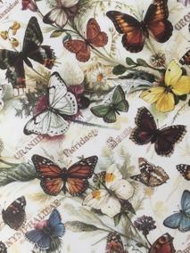 Fjärilar 50x70 - Fjärilar