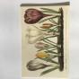 Ask med Vykort, Springflowers