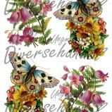 Bild Grafiskt bild blomma, fjäril