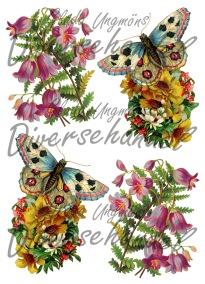 Grafiskt bild blomma, fjäril -