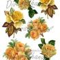 Bild Grafiskt bild gula rosor - Bild Grafisk bild gula rosor 2