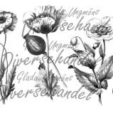 Bild Grafiskt bild vallmo
