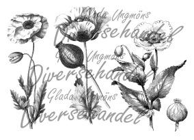 Grafiskt bild vallmo - Bild Grafiskt bild vallmo1
