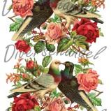 Bild Grafiskt bild ros och duva