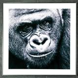 Foto Gorilla