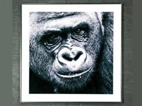 Tavla av Foto på Gorilla -