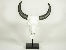 Kranium Vit med horn -