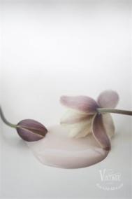 Vintage Paint Antique Rose 100ml -