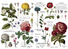 ReDesign Transfer Vintage Botanical -