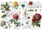 ReDesign Transfer Vintage Botanical