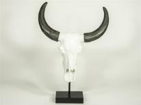 Kranium Vit med horn