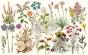 Re Design Decoupage Dècor - Decoupage Dècor Wild Herbs